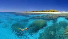snorkelmare